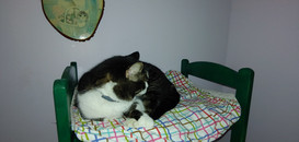 Jesmine, now adopted, in the cat room