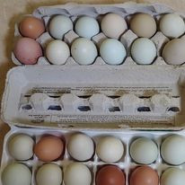 We also sell eggs!