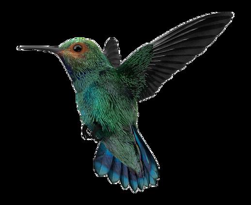 Colibri grafica 3D
