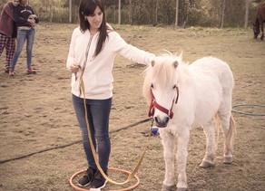 ¿Cómo se desarrolla una sesión de coaching con caballos?