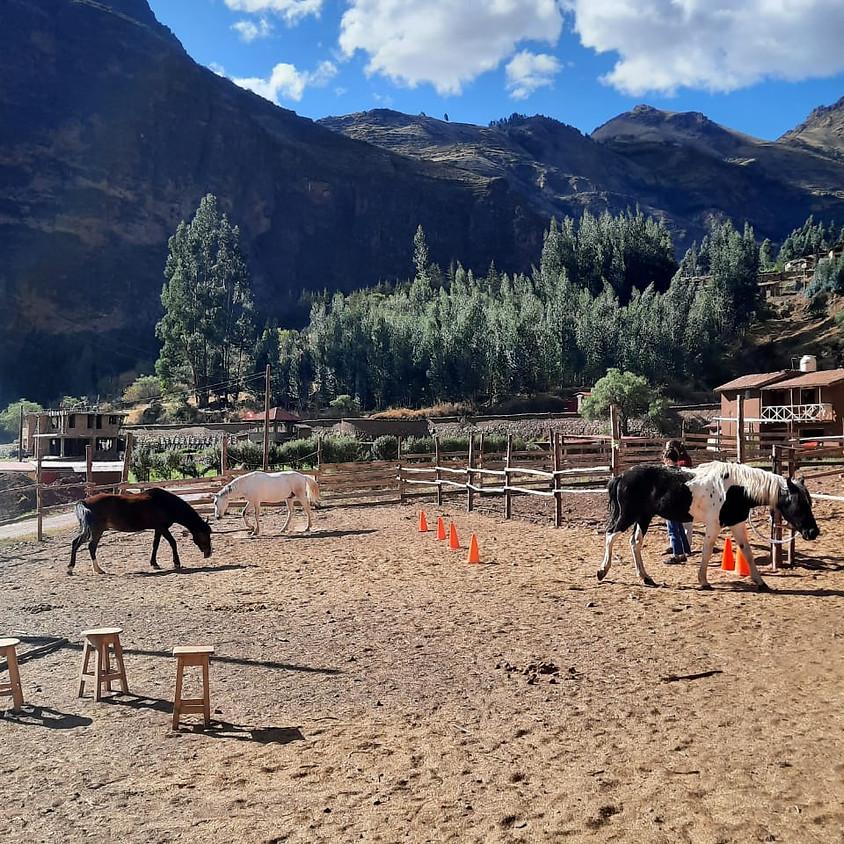 Sesiones de Sanación con Caballos - Pisac, Valle Sagrado, Cusco