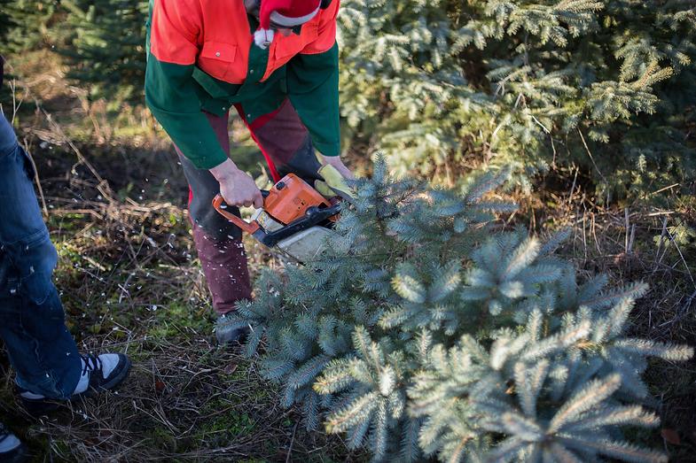 Weihnachtsbaumschlagen 2015 049.png