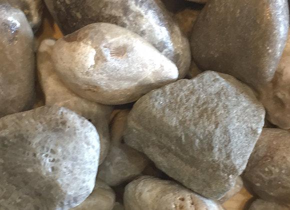 Petoskey Stone Rough