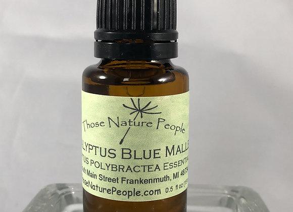Eucalyptus Blue Mallee