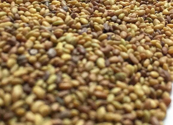 Alfalfa Seeds 1oz
