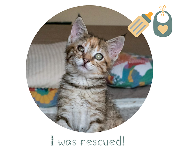 rescued.png
