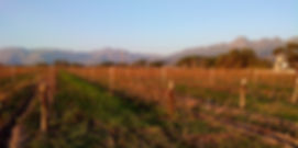 Web vineyard photo_edited.jpg