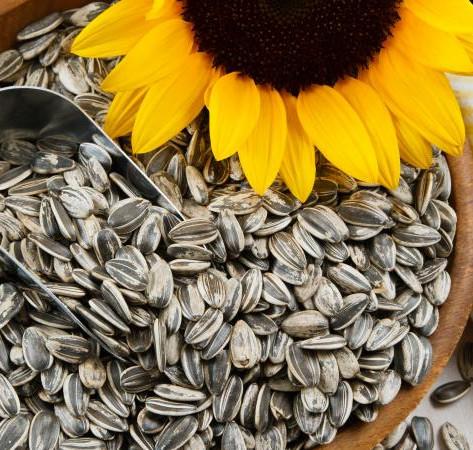 Organic Sunflower Lecithin