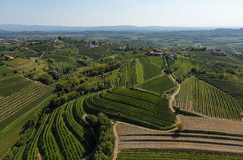 Simcic-0002-vinogradi3.jpg