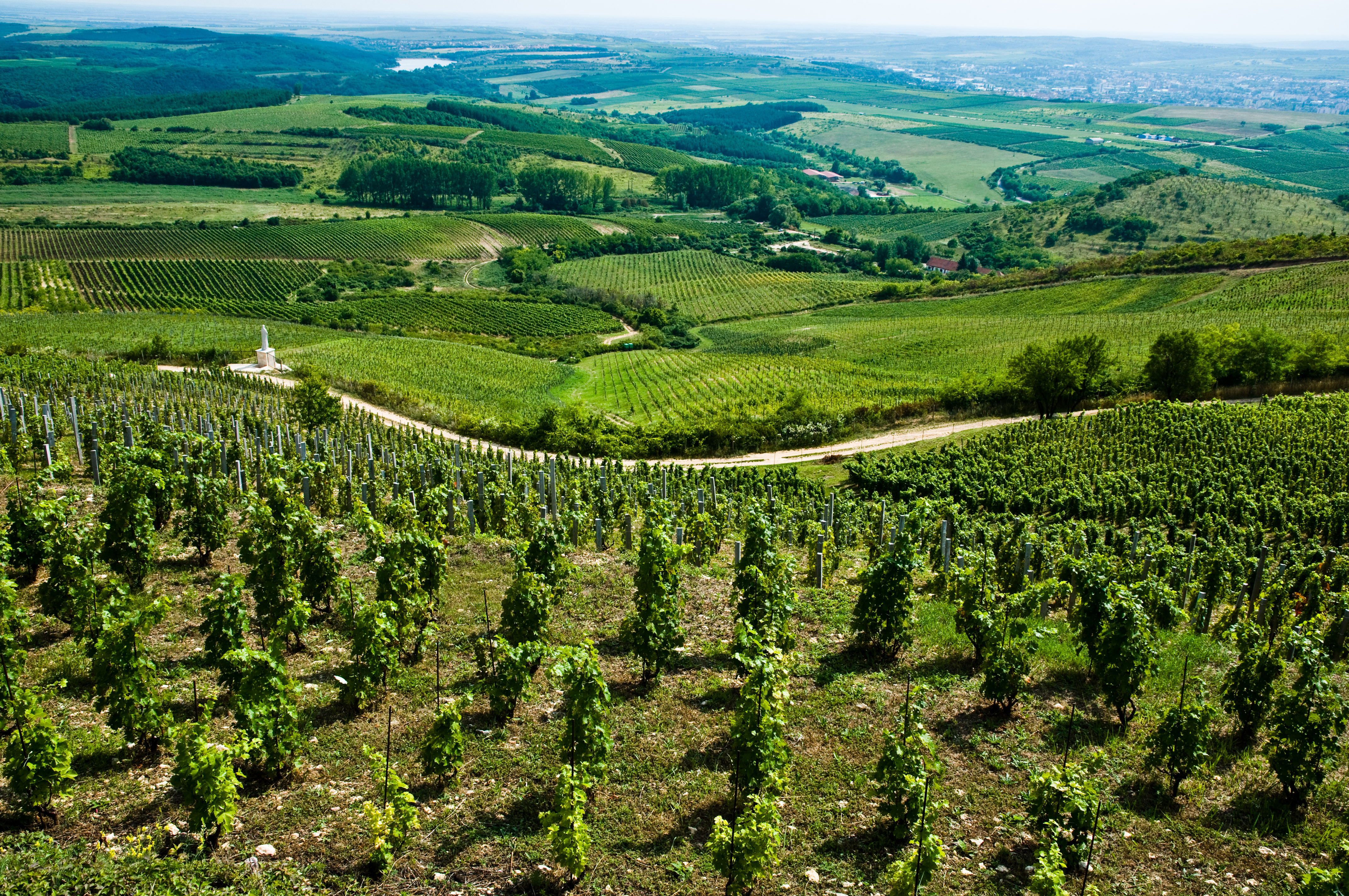 Eger Wines and Heritage