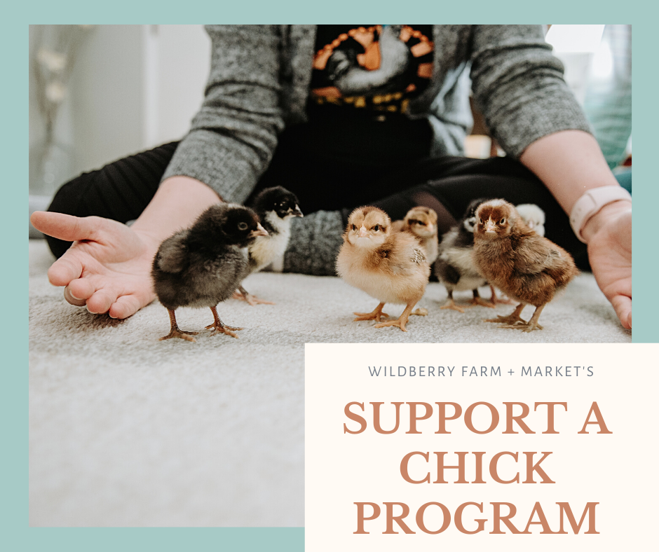 An ad for supporting a chick through Wildberry Farm + Market. Image shows a woman with outstretched arms around baby chicks.