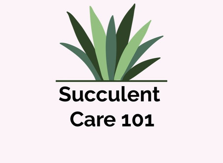 Succulent Care 101