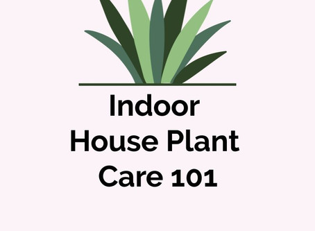 Indoor House Plant Care 101