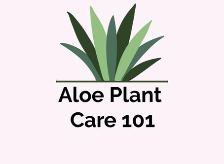 Aloe Plant Care 101