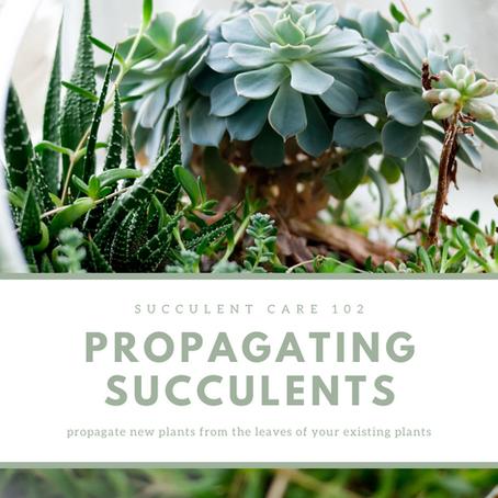 Succulent Care 102: Propagating Succulents