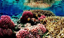 Diving-in-Seychelles