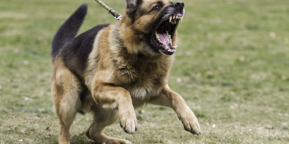 Aggression in Dogs: Defensive Handling and Training