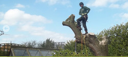 Birches Tree Surgery for Codsall, Wolverhampton, Shropshire & South Staffordshir