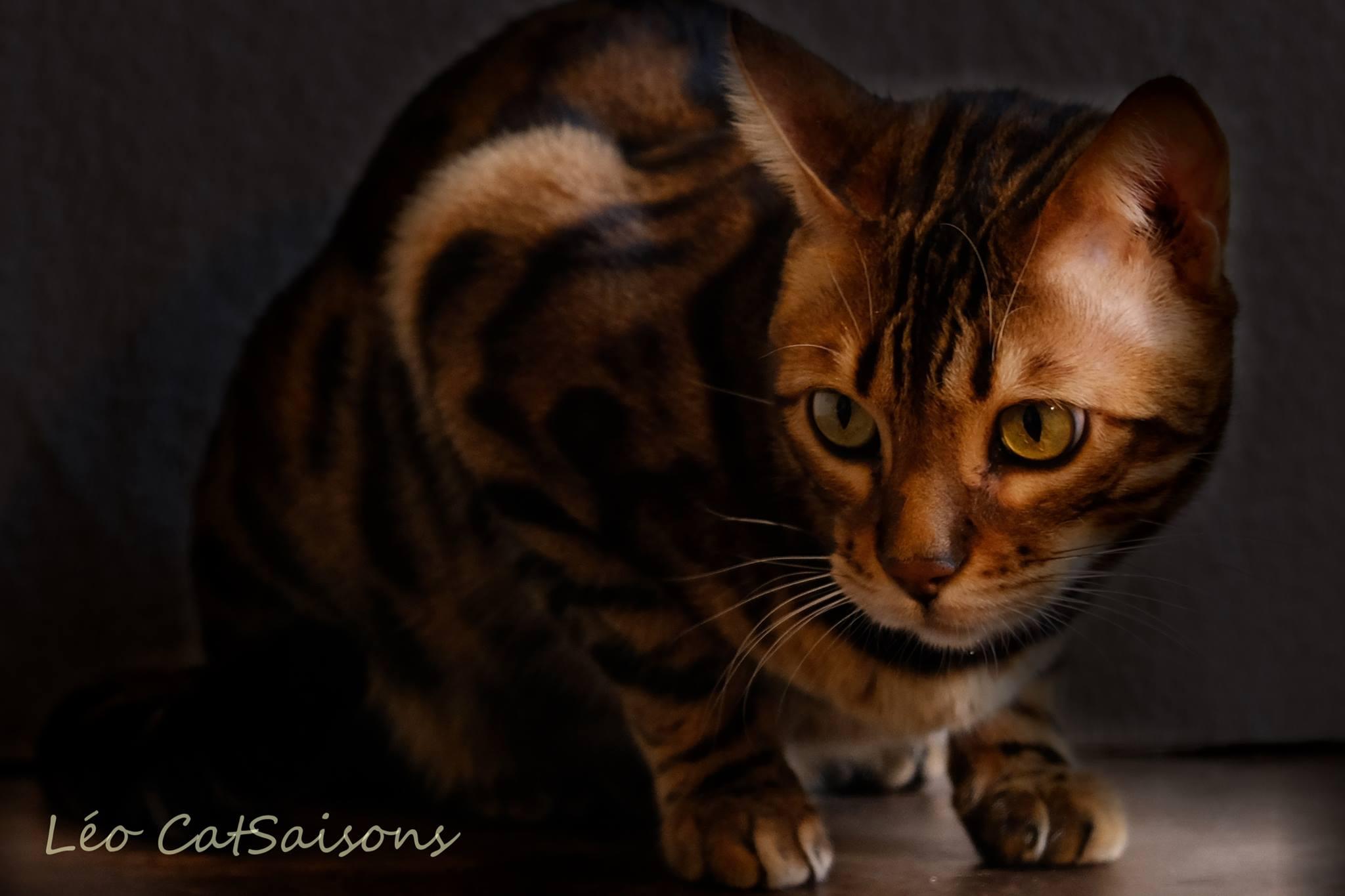 (c) Catsaisons.com