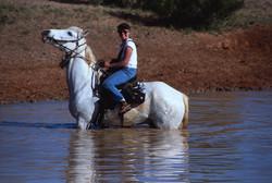 Cattle drive, Australian Outback
