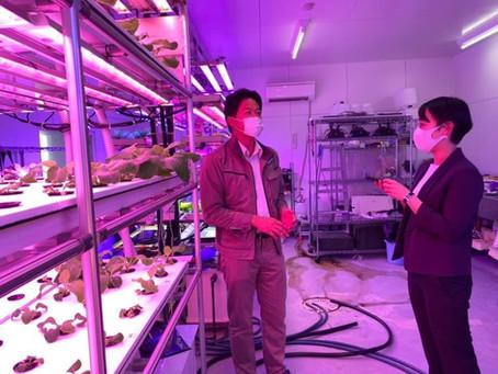 創造的な未来産業として植物工場を:  恵葉&菜 健康野菜
