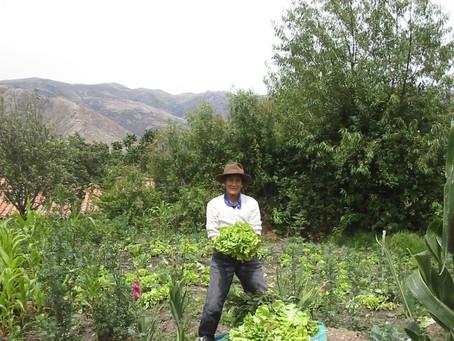 NUESTRAS CHACRITAS…LA CRIANZA DE LA VIDA…una práctica ancestral en nuestras comunidades andinas.