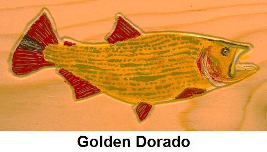 Painted Golden Dorado