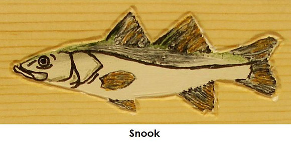 Painted Snook