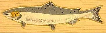 Hand-Painted Coho Salmon