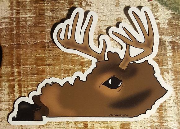 Whitetail Buck - Kentucky