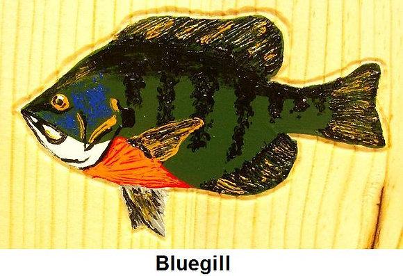 Painted Bluegill