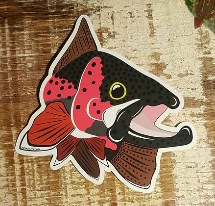 Rainbow Trout - Kype
