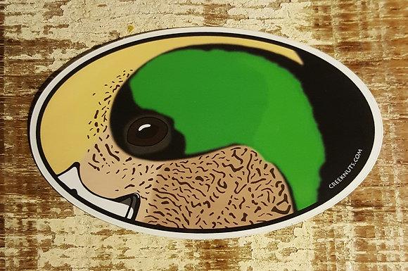 Widgeon Duck Oval