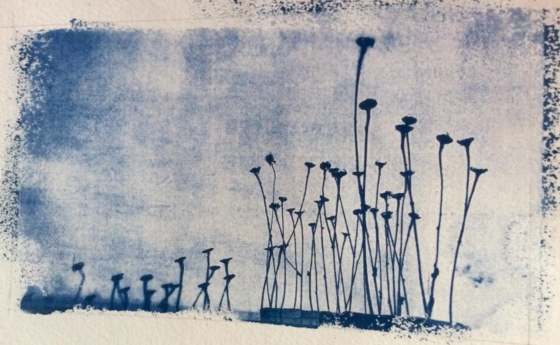 Forêt bleutée