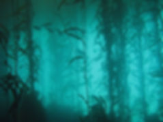 kelp_forest_2.jpg