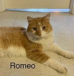 Romeo_edited.jpg