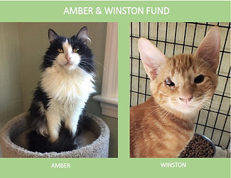 AmberWinstonFund.jpg