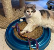 Lucy.jpeg