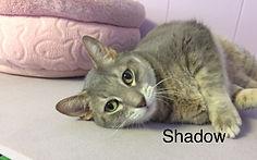 Shadow_xpaw.jpg