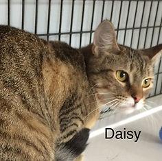 Daisy_main.jpg