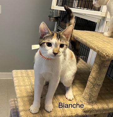 Kitten_Blanche.jpg