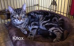 Knox_main.jpg