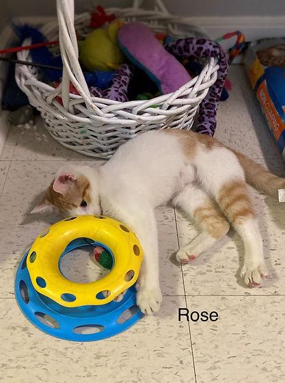 Kitten_Rose.jpg
