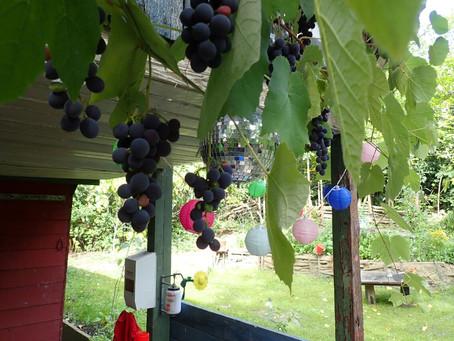 IX. EMSCHERGESCHICHTE(N) - Oder: Vom Weinanbau an der Emscher (damals und heute)