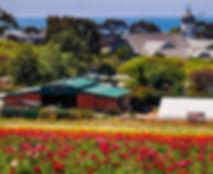 The flower fields cropped.jpg