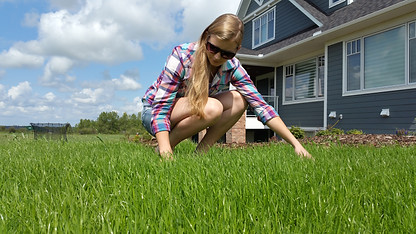 Calgary Lawn Solutions