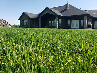 results of calgary lawn solutions hydroseeding