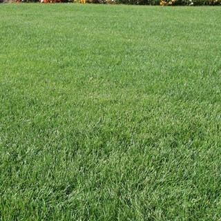 CLASSIC-Grass-Seed.jpg