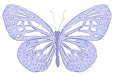 butterfly-sketch-colour2.jpg