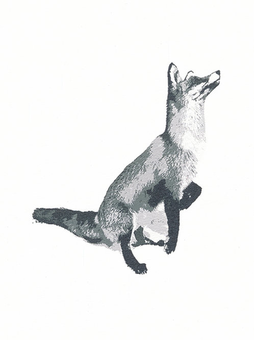 Fox BnW
